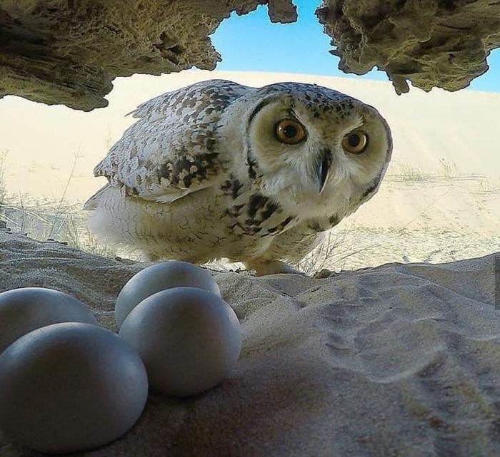 Яишки