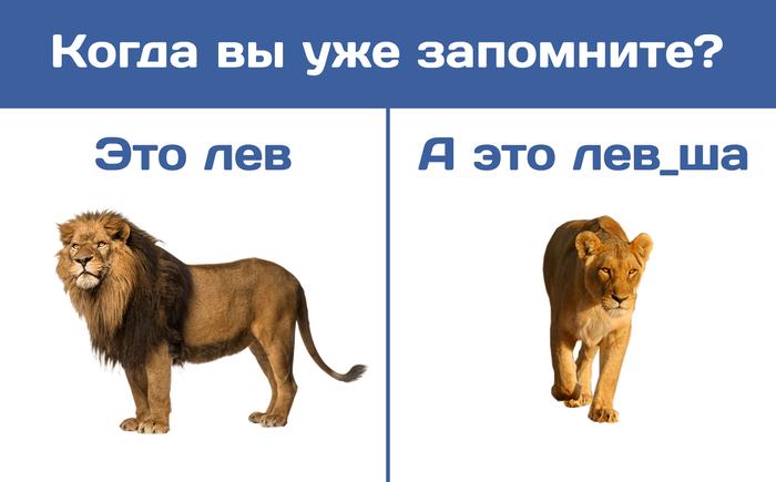 Новость №640:Разбираемся, как наука объясняет существование левшей Наука, Пикча, Левша, Образовач, Лев