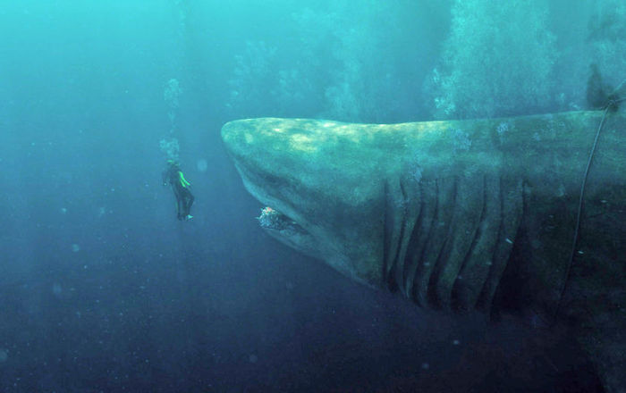 megalodon shark movie - 858×540