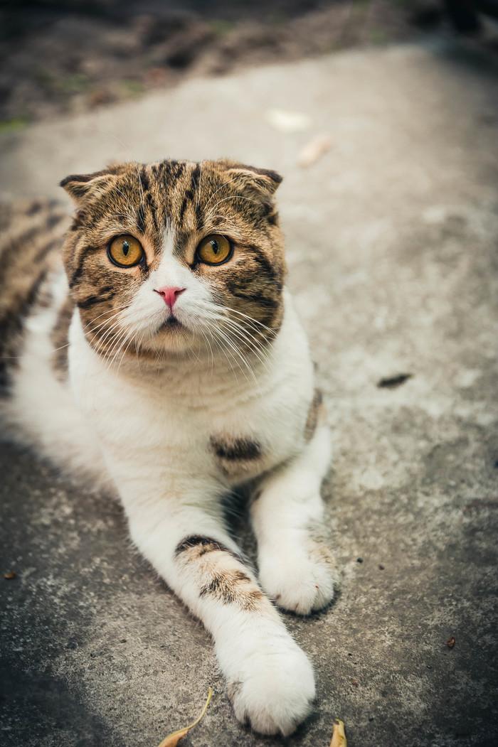 Котик из деревни Фотография, Кот, Котомафия, Длиннопост