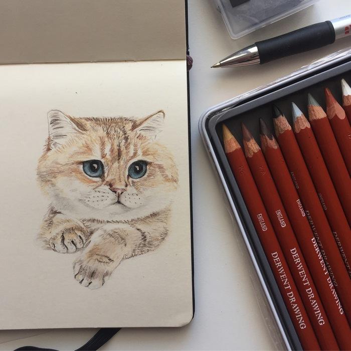 Котики и собакен цветными карандашами Кот, Цветные карандаши, Скетч, Длиннопост, Рисунок, Собака, Животные, Анималистика