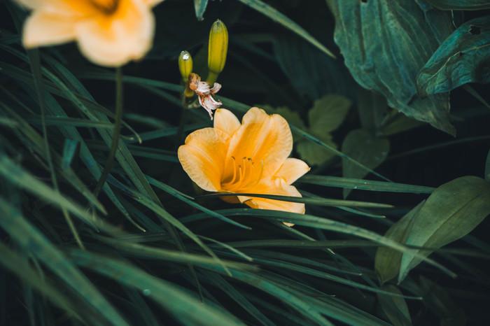 Макросъёмка цветов Цветы, Макро, Макросъемка, Начинающий фотограф, Canon 650d, Lightroom, Длиннопост