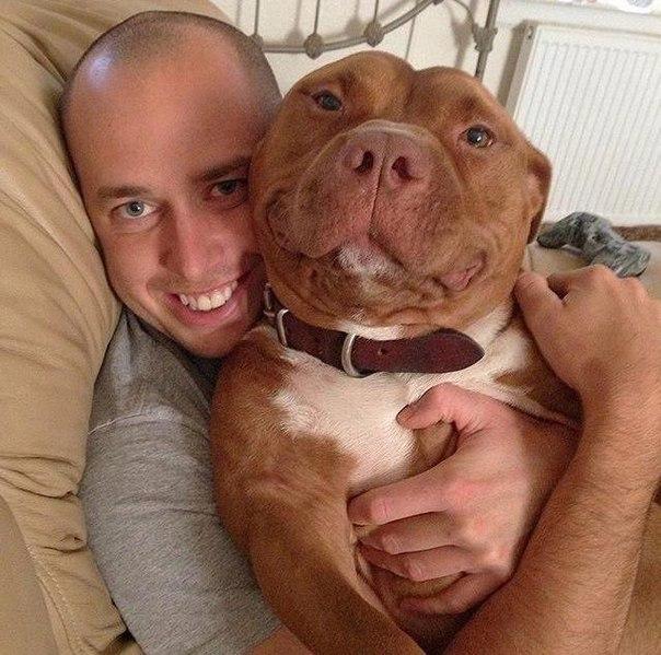 Счастливый песик по кличке Фрикаделька, которого забрали из приюта. Собака, Животные, Счастье, Приют, Доброта, Длиннопост