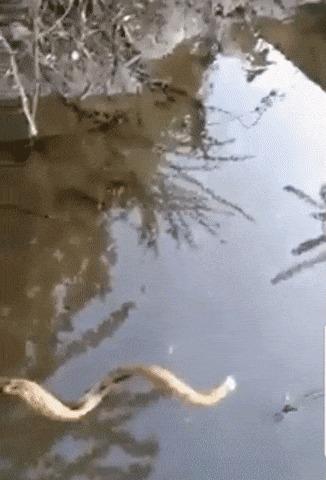 Какая интересная палка Гифка, Палка, Змея, Вода
