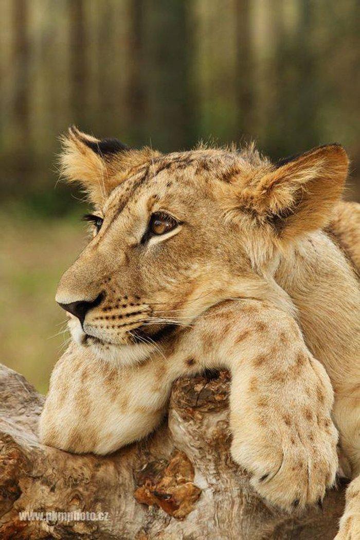 Эти реснички не одного льва с ума свели, наверное