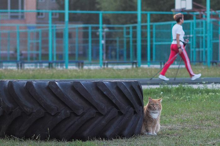 И немного о спорте Кот, Фотография, Скандинавская ходьба, Моё