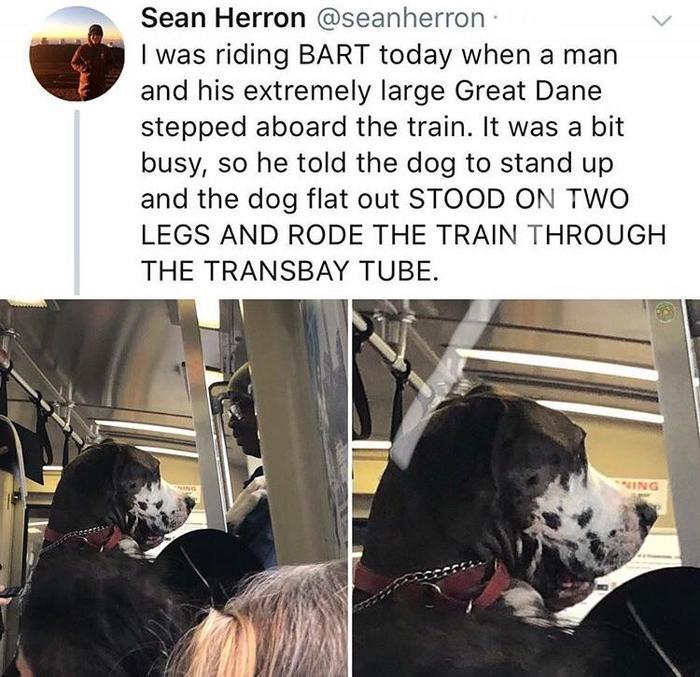 Просто едет домой как и все мы Собака, Умница, Метро, Поезд, Животные, Воспитание, Reddit