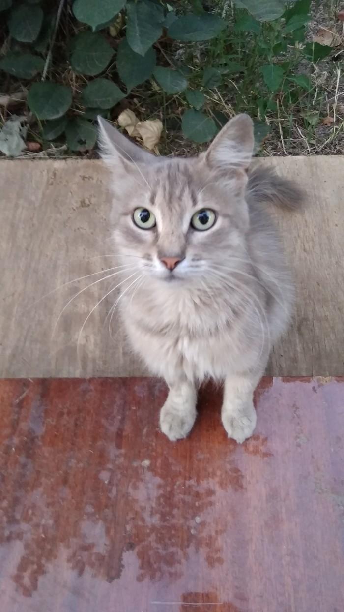 Дымчатый Кот, Котомафия, Длиннопост