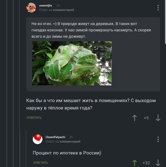 Что мешает жить тропическим муравьям в России? Скриншот, Комментарии, Комментарии на пикабу, Муравьи, Ипотека, Картинки