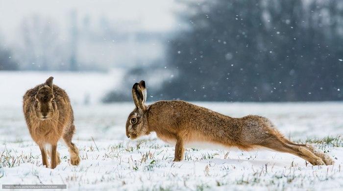 Пока ты спишь, заяц качается Заяц, Лес, Зима, Фотография, Качок, Животные, Забавное