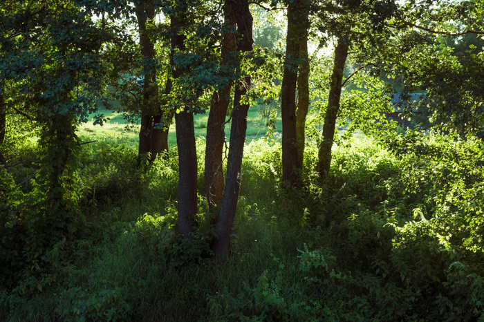 Рандомная подборка. Путь. Река. Покой Фотография, Пейзаж, Дорога, Рожь, Река, Nikon d5200, 18-55kit, Столб, Длиннопост