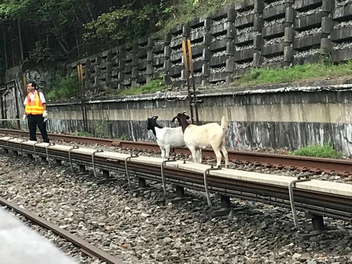 Просто два козла в метро Нью-Йорка