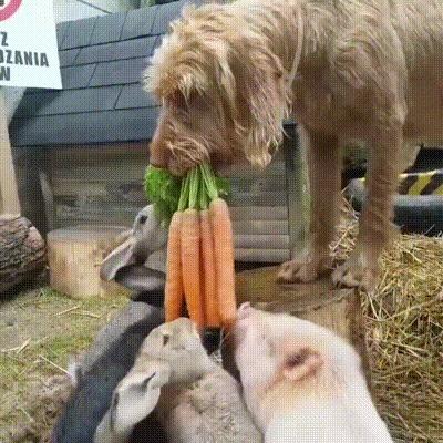 Пёс пришёл покормить своих маленьких пушистых друзей