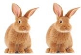 Как связаны кролики и Парфенон? Наука, Математика, Научпоп, Фибоначчи, Золотое сечение, Человек наук, Биология, Гифка, Длиннопост