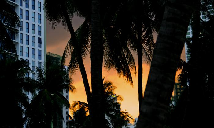 Вьетнамский закат. Нячанг. Закат, Фотография, Вьетнам, Пальмы, Пляж, Отпуск
