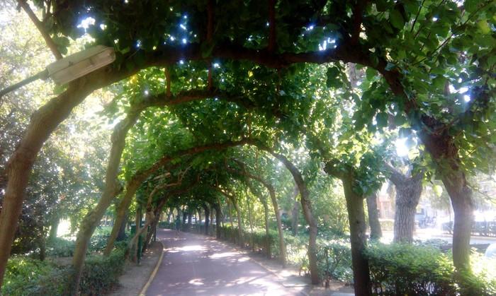 Арка из сросшихся деревьев Тоннель, Турция, Срослись, Арка