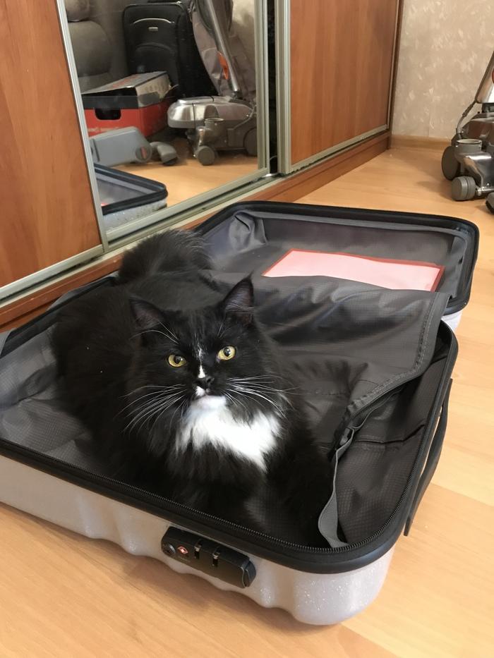 Собираю чемодан. Половину, как видите, уже собрала)