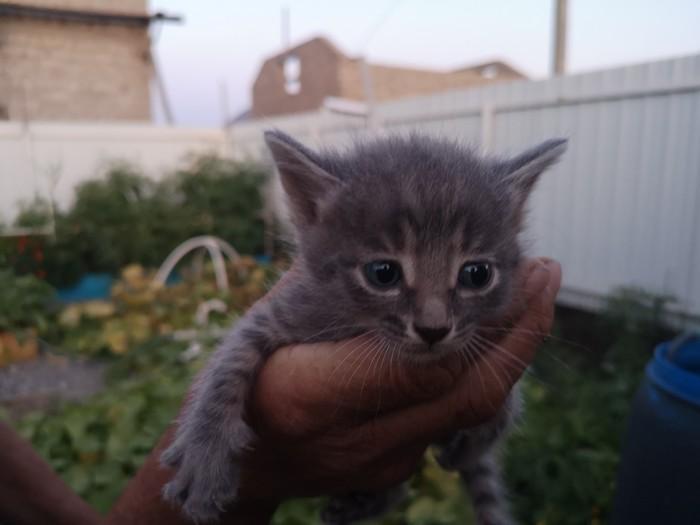 Котят в добрые руки, Астрахань В добрые руки, Котята, Астрахань, Кот, Помощь, Животные, Без рейтинга