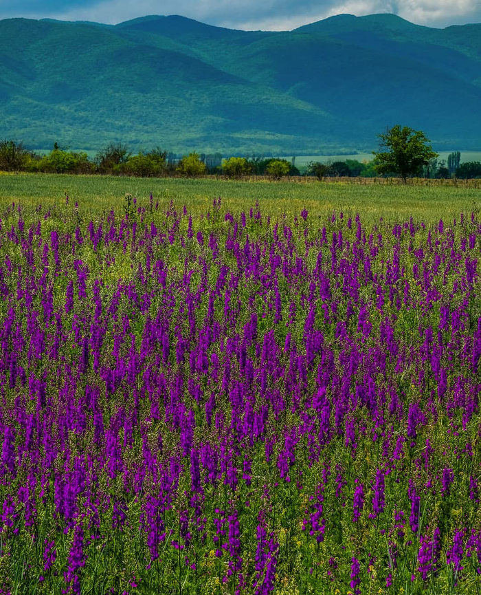 Цветочное поле на фоне гор, республика Дагестан.