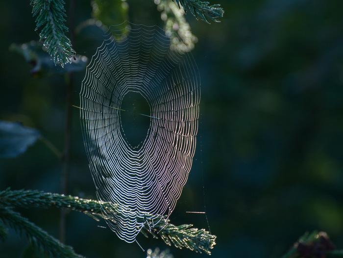 Кружева Паутина, Утро, Природа, Красота, Длиннопост