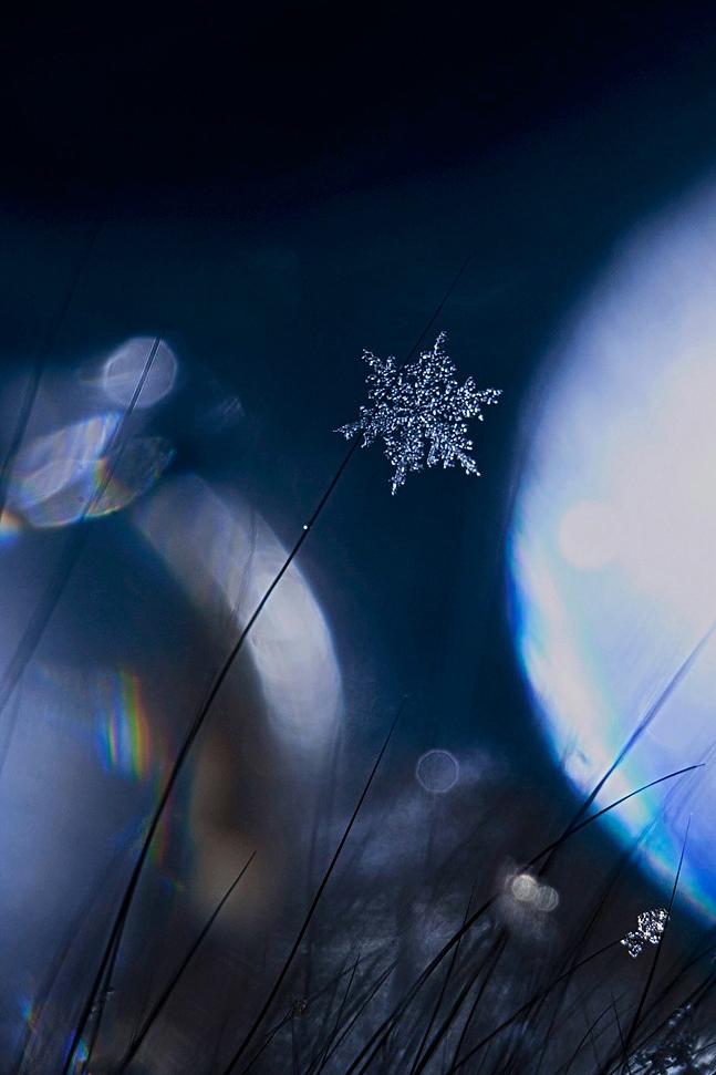 Одна из снежинок, что падают с неба... Фотография, Снежинка, Макро, Canon