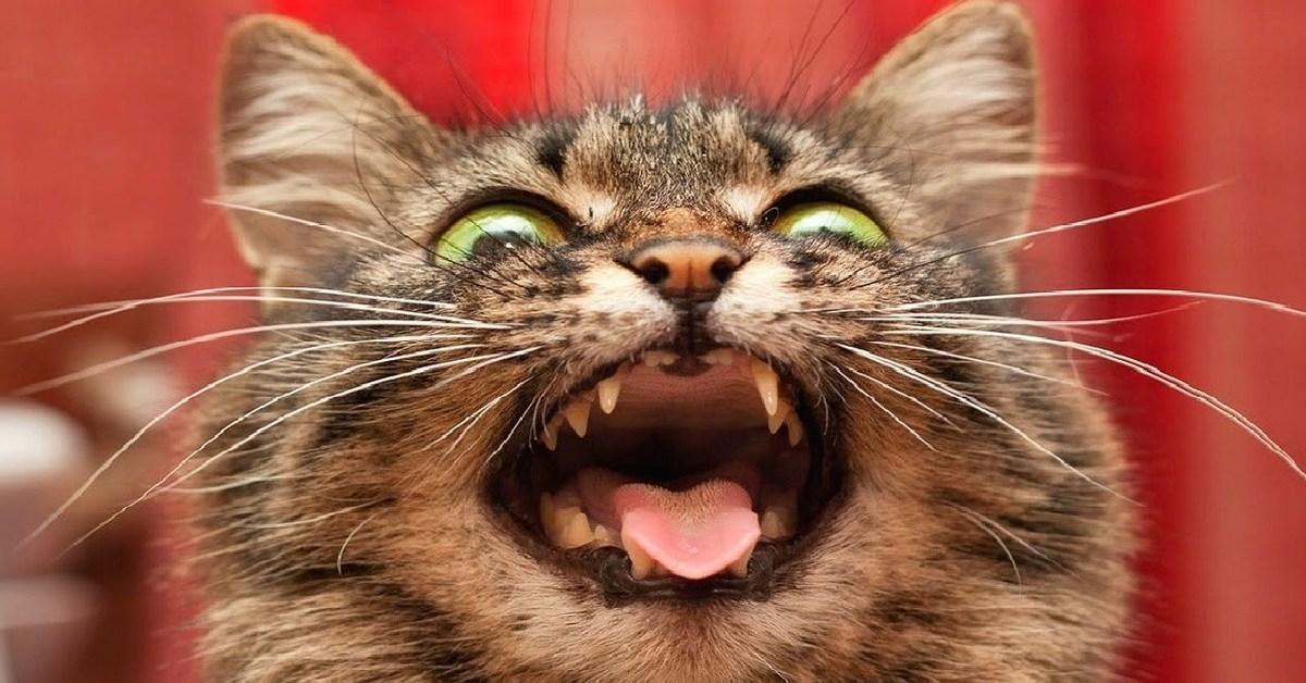 сборки стабилизаторов картинки с котом как настроение напротив окна большой