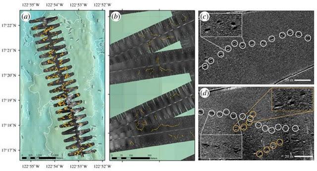 На дне Тихого океана обнаружены следы гигантского существа Загадка, Существо, Океан