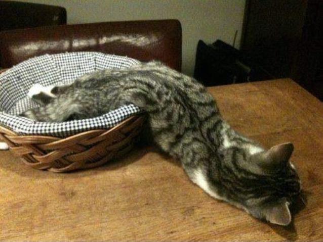 Квантовая физика: коты не жидкость! Кот, Коты это жидкость, Опровержение, Квантовая физика, Конденсат Бозе-Эйнштейна