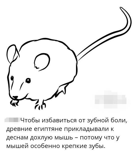 Зубная мышь