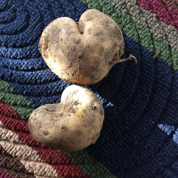 С ДВ с любовью:) Урожай, Прикол, Картошка любви