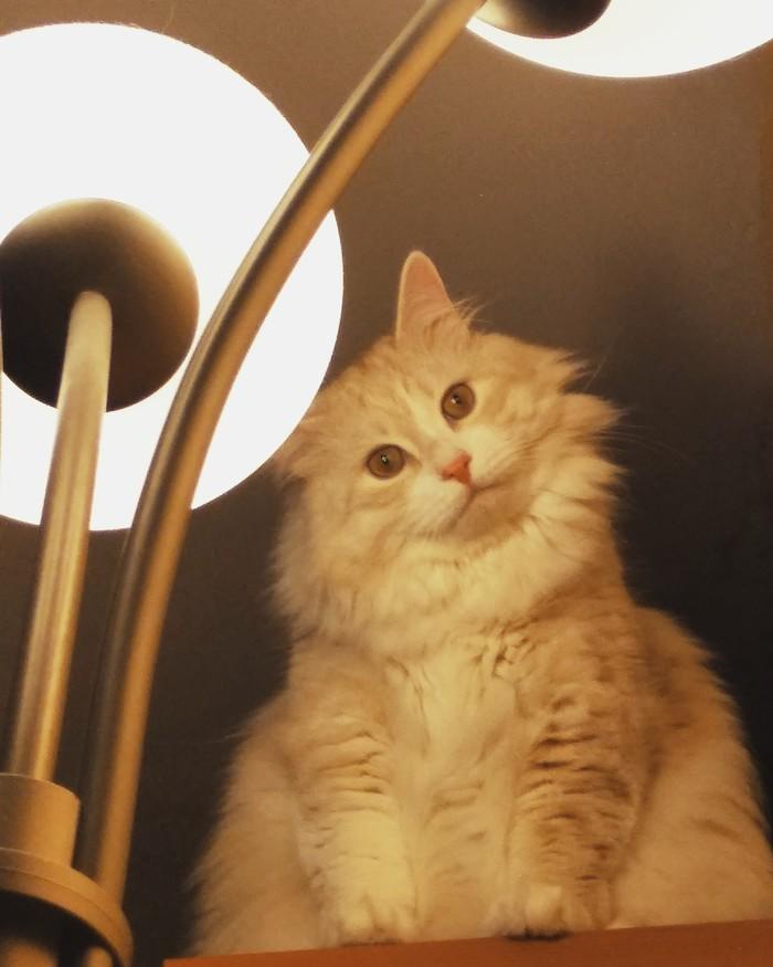 Когда забыл покормить кота на ночь