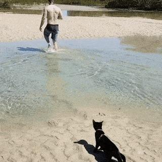 Какой хозяин, такой и кот.