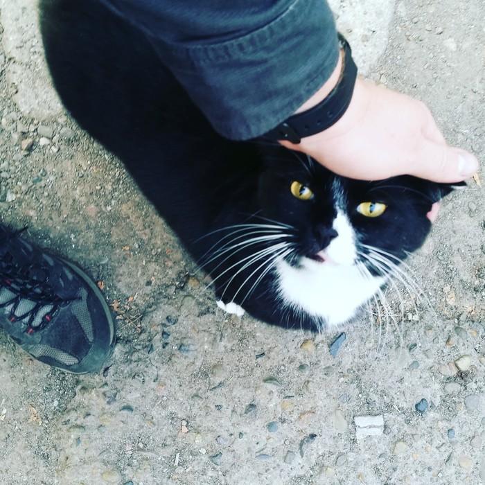 Погладить соседского кота перед работой на удачу.