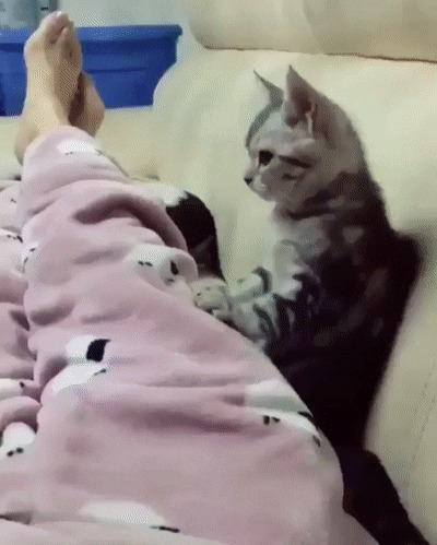 Воспитывай кота правильно!