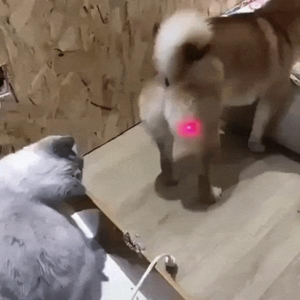 Ой, что это? Кот, Собака, Лазерная Указка, Гифка