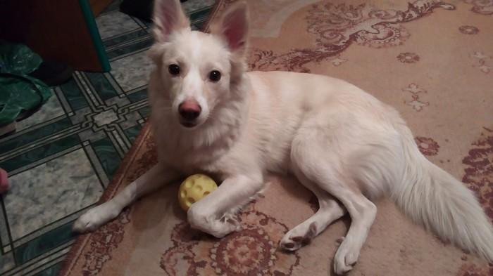 Моя первая собака) Собака, Метисы