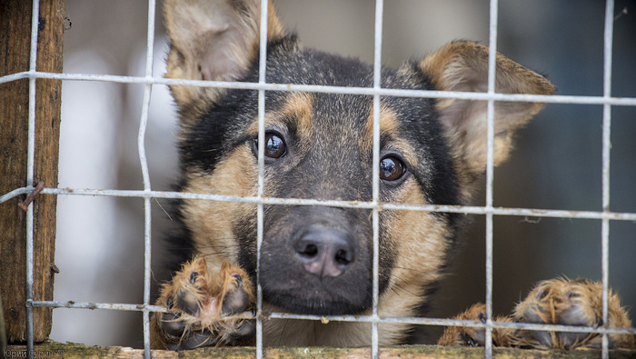Хотелось бы попросить о помощи... Приют, Животные, Помощь, Информация, Опрос, Спасение животных