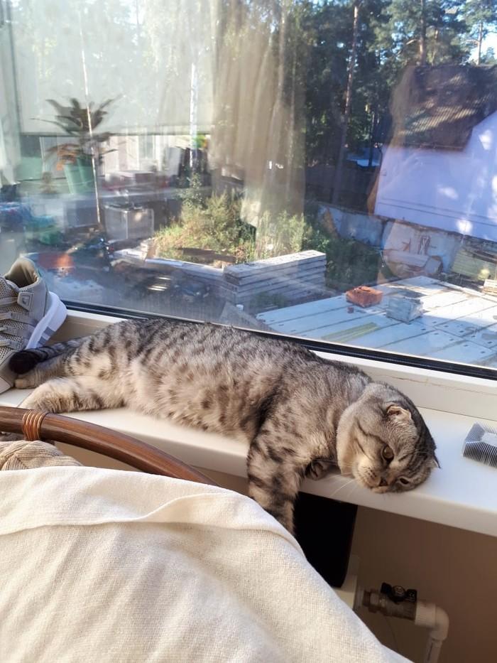 Вот и лето прошло....время задумчивых котов... Кот, Котомафия, Осень, Задумался, Длиннопост