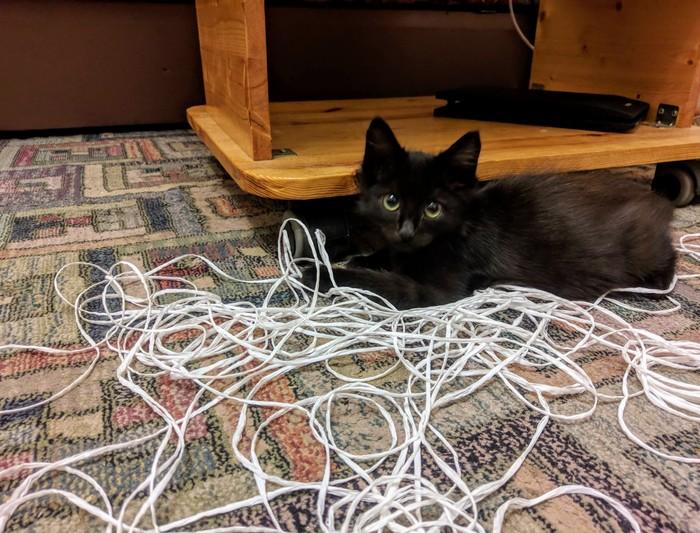 Хулиган пойман с поличным Кот, Котомафия, Фотография, Черный кот