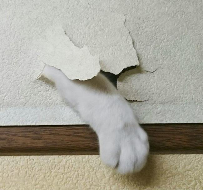 От меня не спрячешься! ;) Кот, Интерьер, John Cena