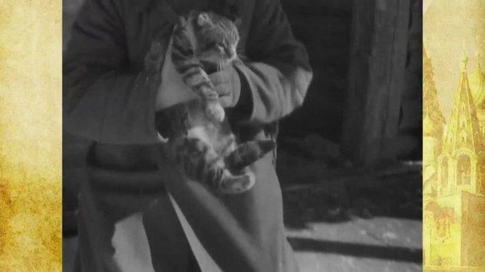 """""""Кошачья"""" ловушка времен второй мировой войны Кот, Ловушка, Вторая мировая война, Длиннопост"""