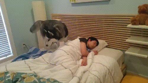 Попытка ненавязчиво разбудить хозяина