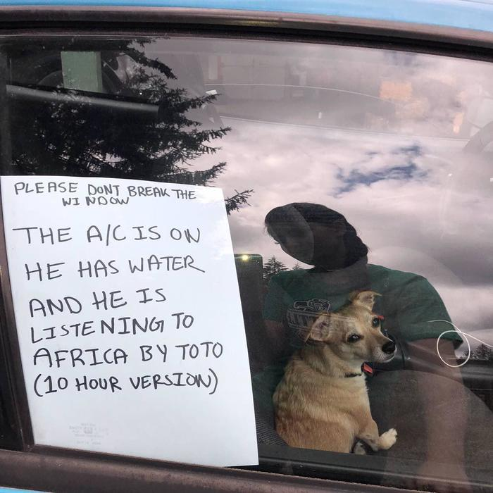 Не разбивайте окно Фотография, Собака и машина, Баянометр молчит