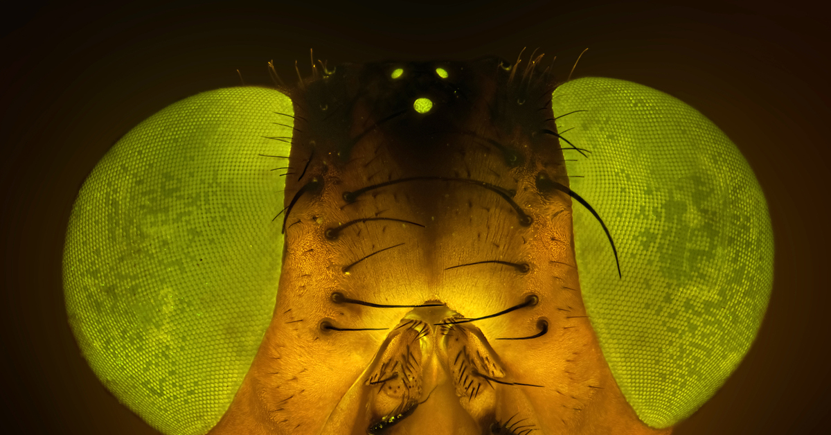 Картинки про муху под микроскопом