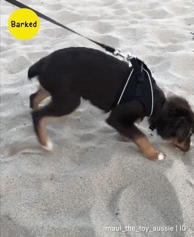Невкусный песок