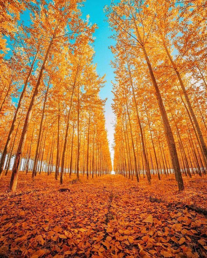 Осень. Орегон.