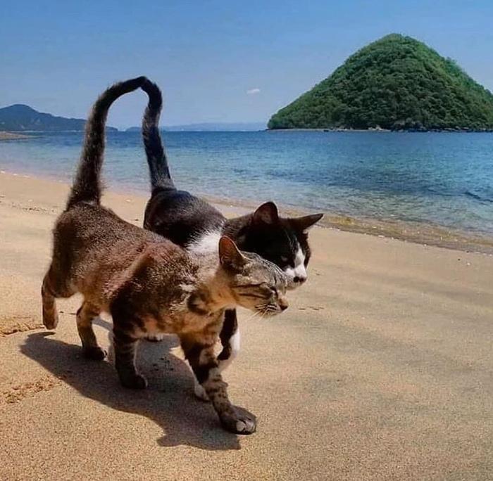 Романтический подиум на пляже ..