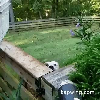 - А ну иди сюда!