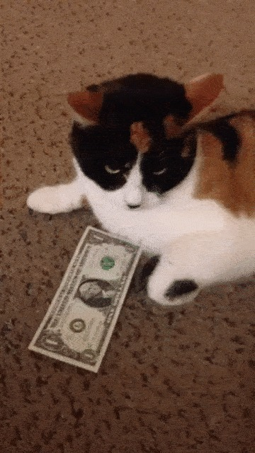 Когда просишь в бухгалтерии денег на новое оборудование...