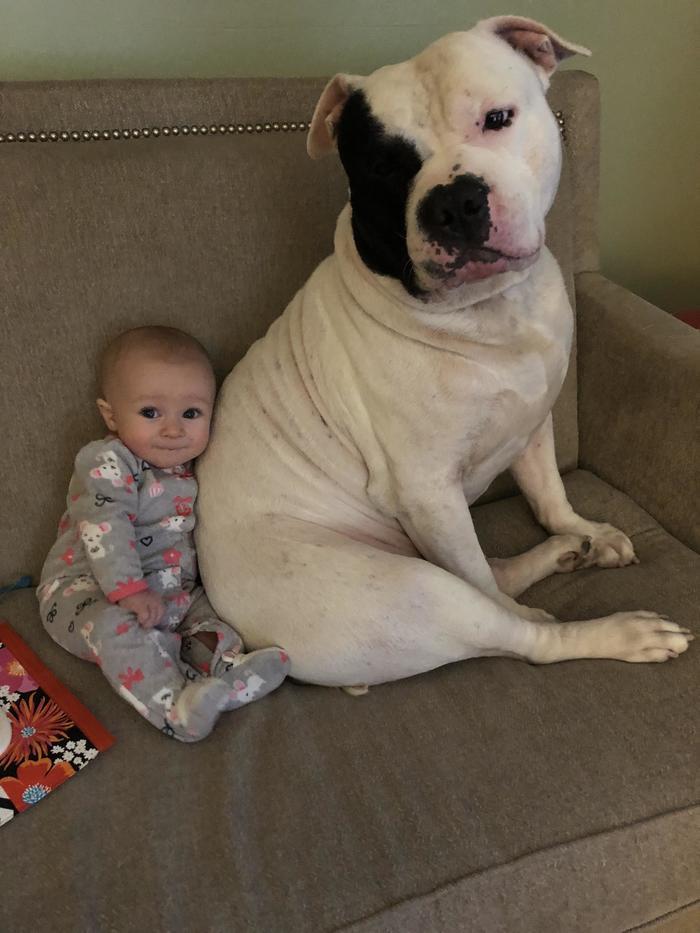 Моя спасательная собака мамы Рико лучшие друзья с моим ребенком. Я прервал их, наблюдая за Свинкой Пеппой.